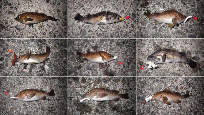 その他魚たち
